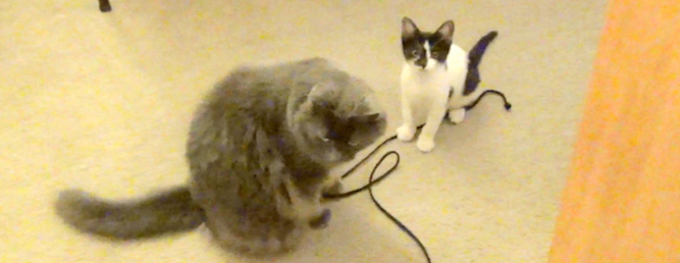 Leeloo Arya kittens string