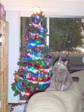 Leeloo: I can has Christmas Tree?