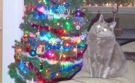 I Can Has Christmas Tree?