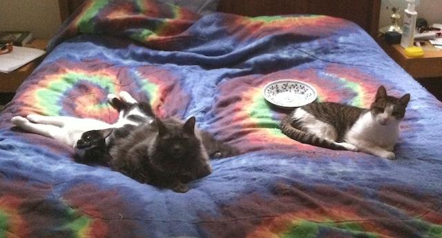 My three beautiful kittens