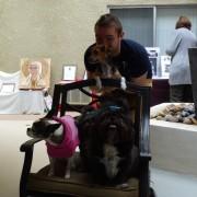 Art Show Doggies